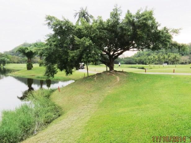 01 Ficus microcarpa IMG_0196