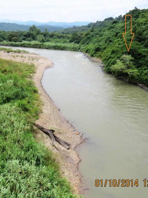 Ficus racemosa Labuk River Sabah.JPG