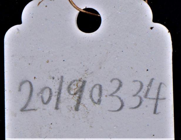 03 Ficus endospermifolia Kinabalu 20190334★ Shuai LIAO-LSL_9245.JPG