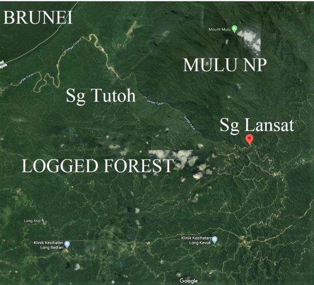 Sg Lansat  next to Mulu Park.png