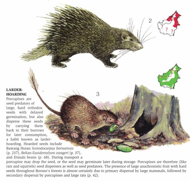 245-252 Weasel and porcupines