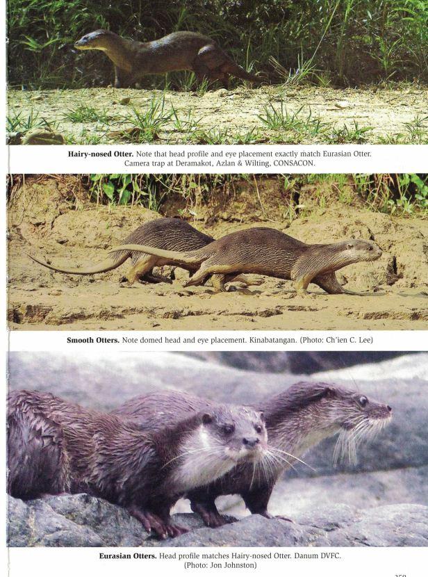 259-270 Civets and otters - Copy.jpg
