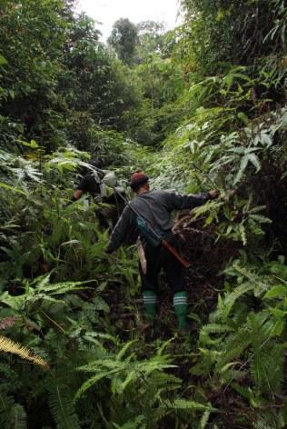 Overgrowth - On the way to Batu Lawi