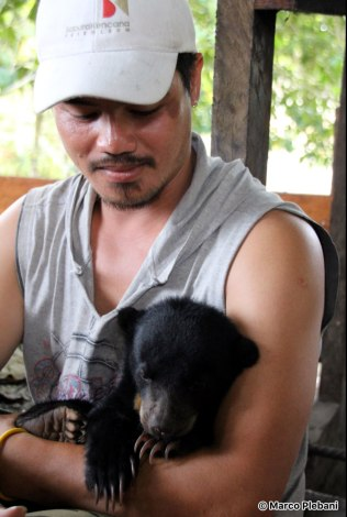 Pa Lungan bears