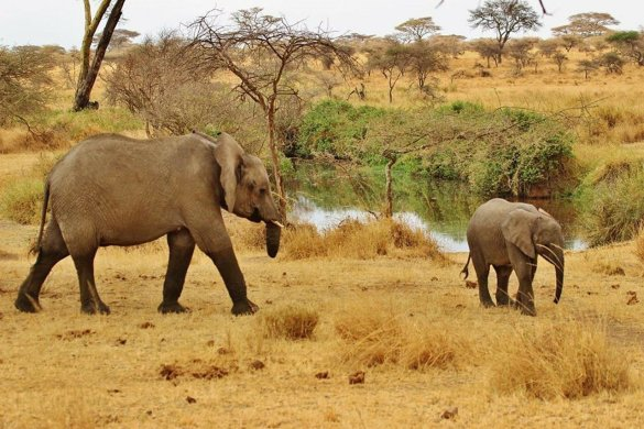Amazing Ways to Experience South Africa