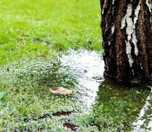 Vandstanden stiger, grøn omstilling er bagud