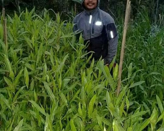 WhatsApp ImNEWS: Sulistyo saat memamerkan ribuan bibit pohon tengsek hasil budidayanya (Foto: Istimewa)age 2020-01-27 at 18.39.02