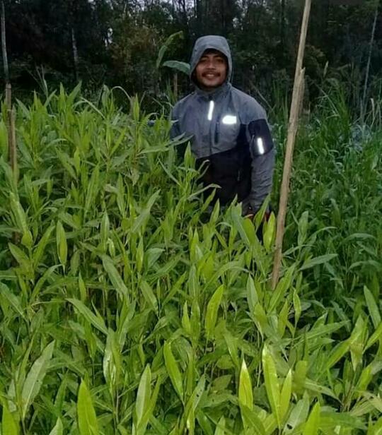 NEWS: Sulistyo saat memamerkan ribuan bibit pohon tengsek hasil budidayanya (Foto: Istimewa)