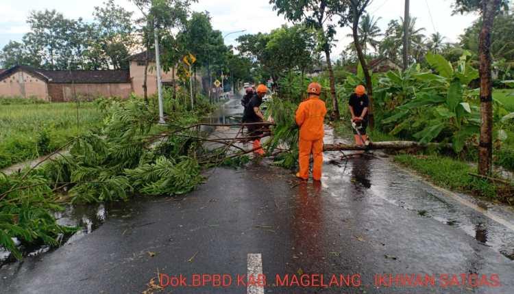 NEWS: Pohon tumbang tutup jalan provinsi di Muntilan (20/5/2020)-(Foto: BPBD Kabupaten Magelang)