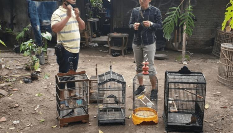 SANGKAR: Barang bukti lima burung yang dicuri. (foto: istimewa)