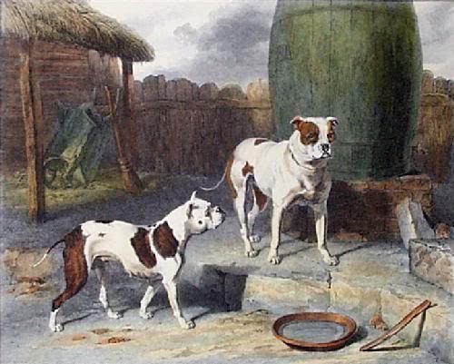 Antiguo Bulldog Inglés