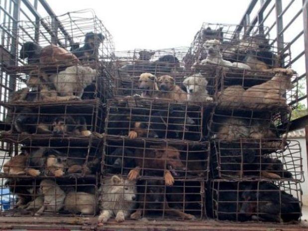 505 perros iban amontonados en 156 jaulas