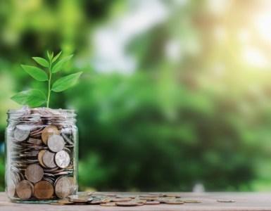 dinero-planta