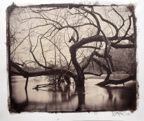 An albumen print toned with gold from a wet plate collodion negative format 10x12""