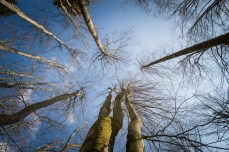 Peace of a virgin forest. Photo Borut Peterlin