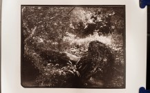 High contrast carbon print from wet plate collodion negative