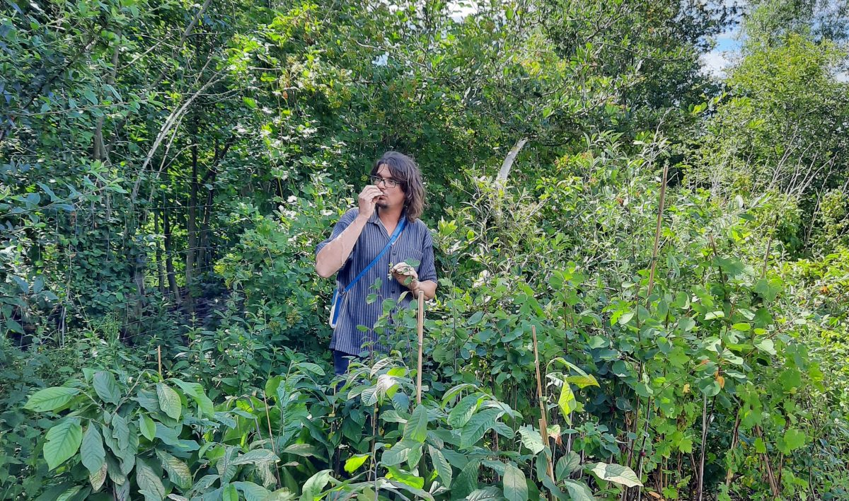 voedselbos-woudezel