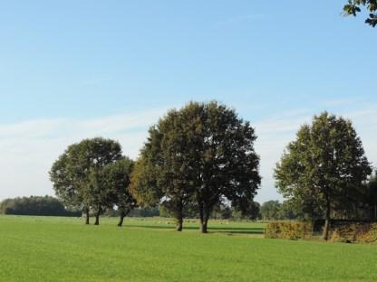 eiken-in-het-veld
