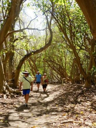 Walking through the pisonia trees.