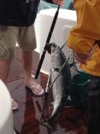 Greg's first catch. A tuna.