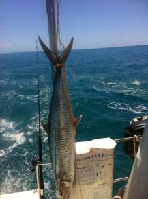 Aqualibrium's spanish mackerel. We got an invite to share.