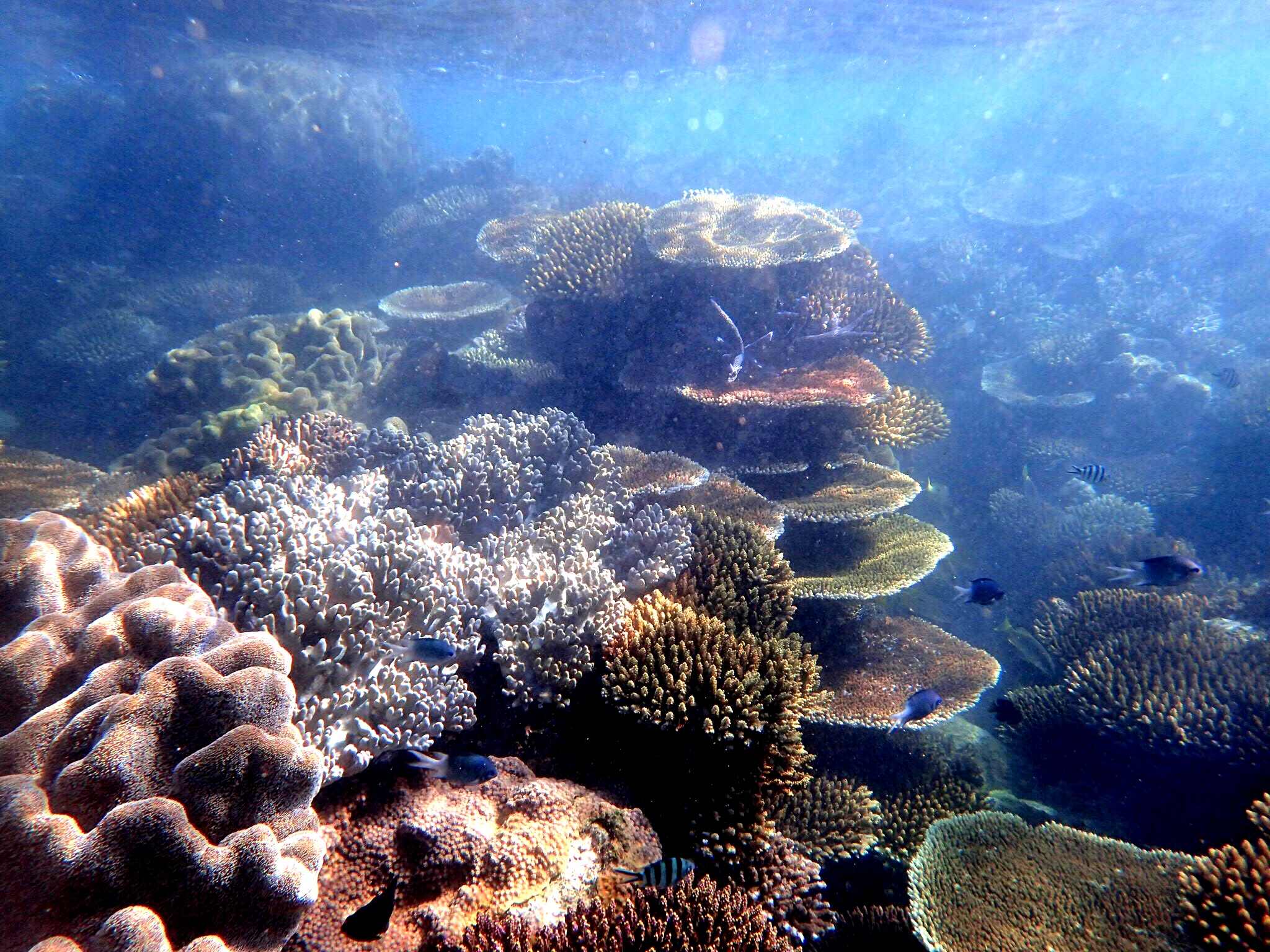 Plate coral gardens