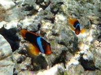 We saw lots of clownfish. Thank you Gary for showing me how!