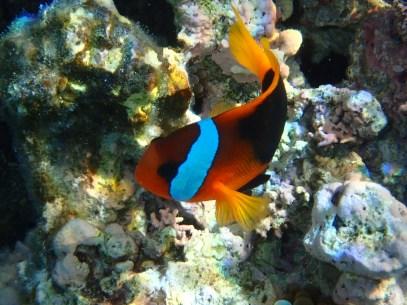 Nemo! Love these little fish.