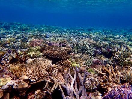 A coral garden ...