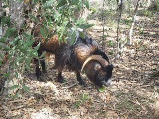 Wild goats are on the island. Cate was cooking her goat stew when we visited.