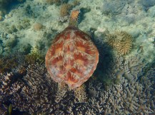 I swam with this turtle. Not fazed until I tried to close the gap.
