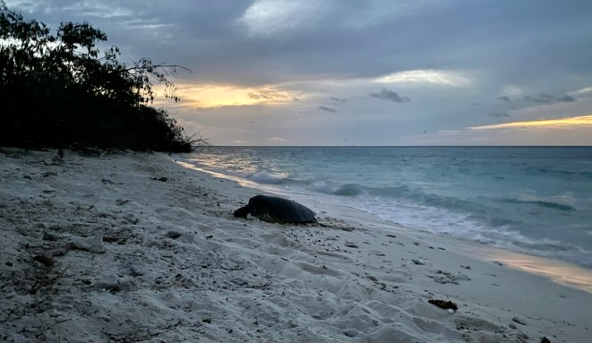 It didn't take long. Just on dusk we saw our first turtle.