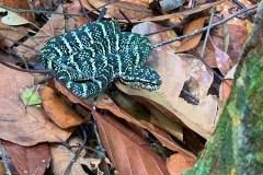 Hiking Gunung Bintan Snake