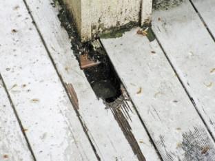 Painted fir deck rotting