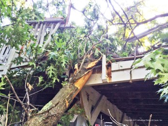 Oak Tree hits deck