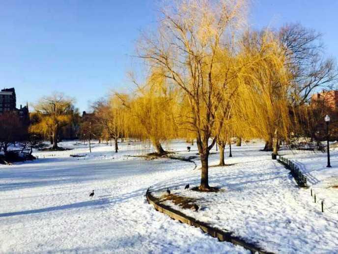 2015_Winter_Boston6
