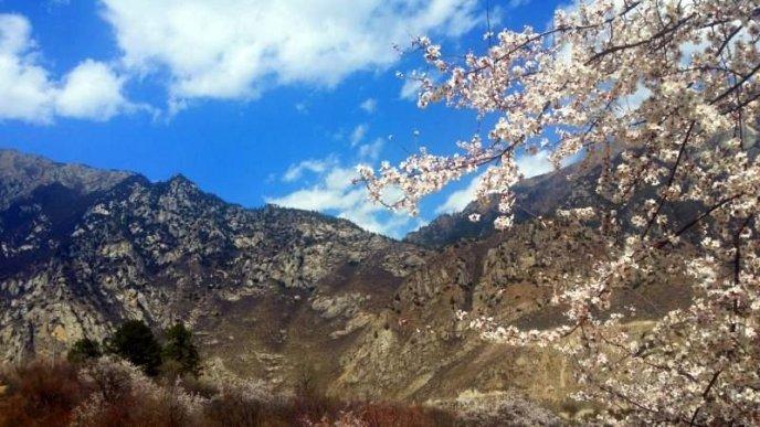 2915_Tibet_Spring16