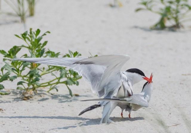 Bird_Kiss_Bo_Yang