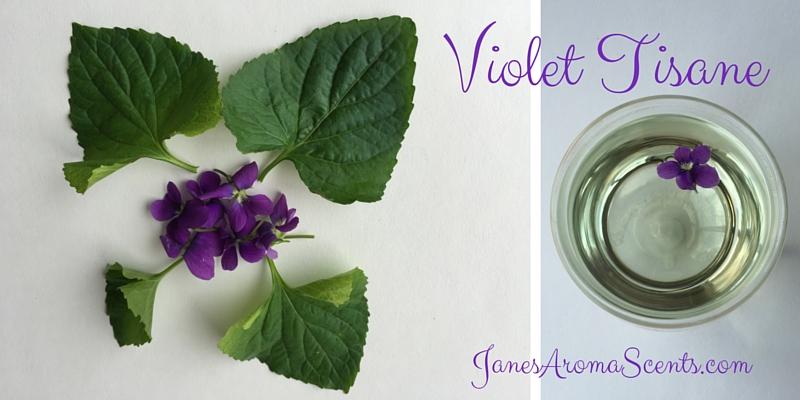 Make a Violet Tisane