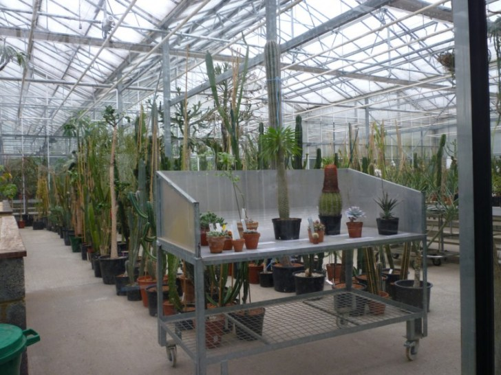 photo credit: Behind-the-scenes in Kew's Tropical Nursery via photopin (license)