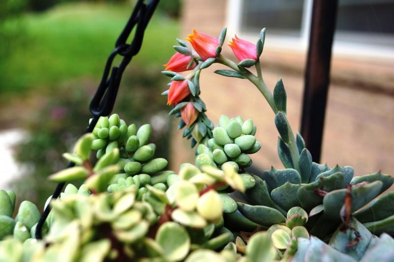 succulent-804988_1920