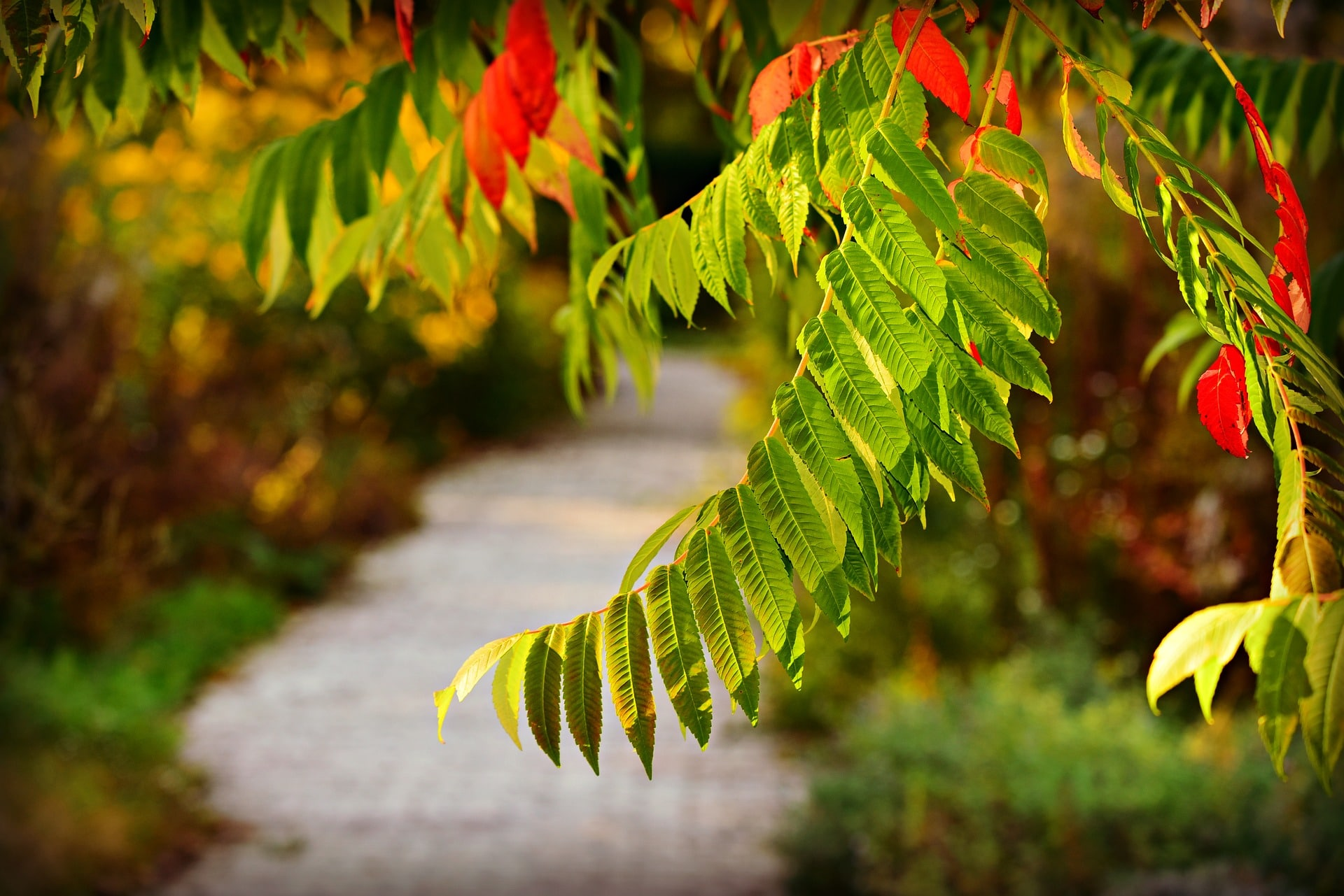 Tree leaves along pathway