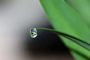 water droplet on leaf