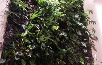 緑の壁@GINZA SIX