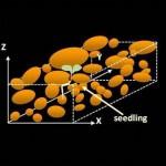 Modelling germination and emergence of <i>Medicago</i>