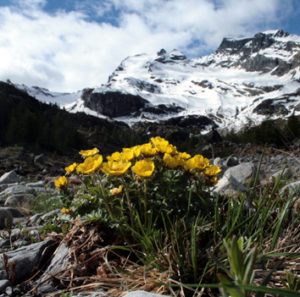 Climate warming shifts the timing of seed germination