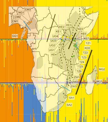 Biogeography of <i>Prunus africana</i> in Afromontane forests