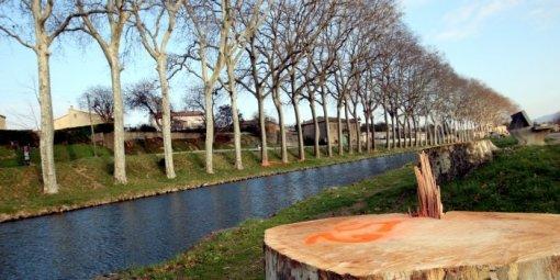 Les platanes abattus le long du Canal du Midi