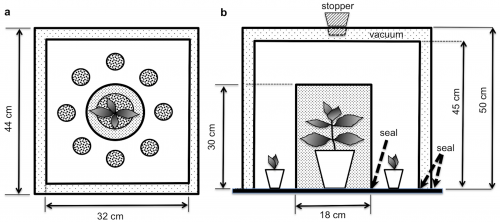 Schematic representation of the custom-designed experimental unit to study communication pathways between fennel and chilli