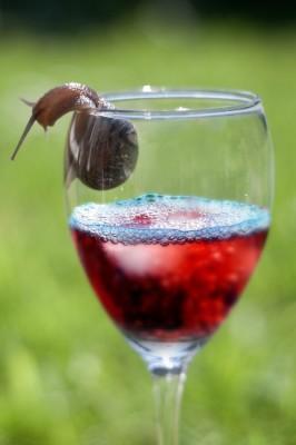 A snail on a wine glass